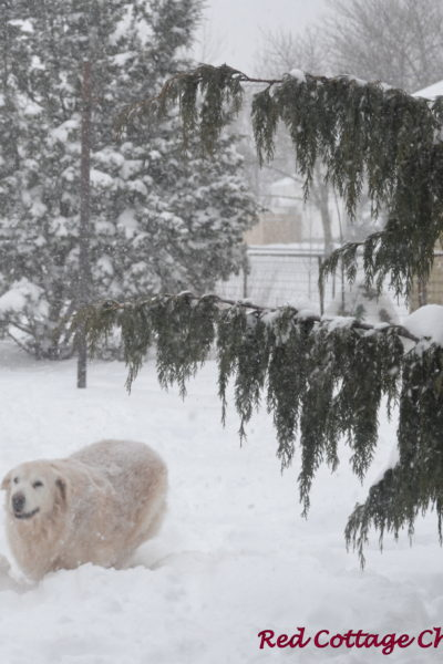 Snow Day!!
