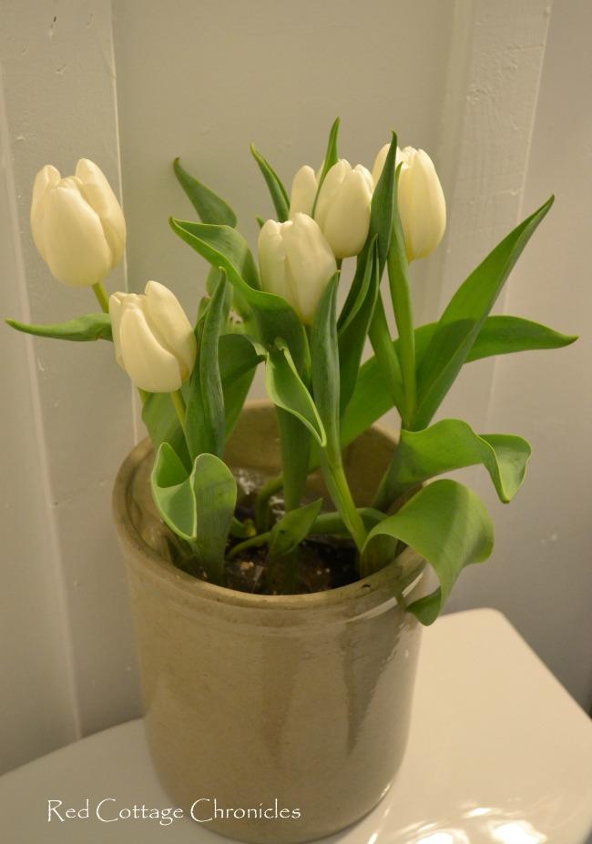 tulips in a crock