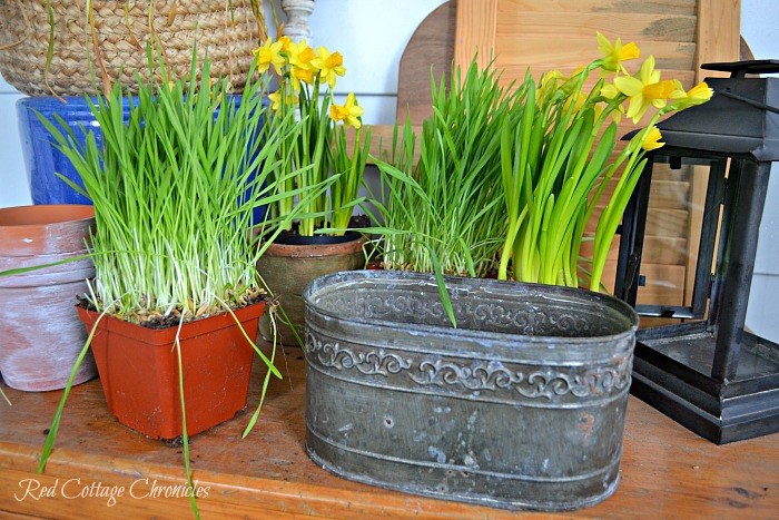 Easy DIY Daffodil Spring Planter