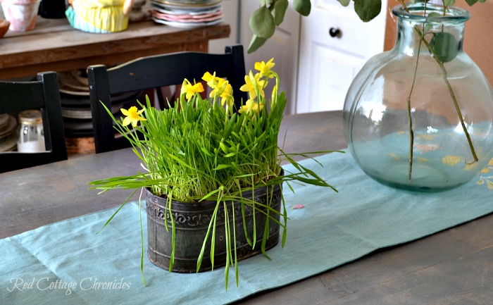 Mini Daffodils make this DIY Spring Planter easy and inexpensive