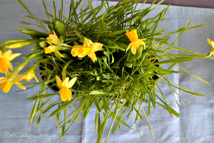 DIY Spring Planter brings spring inside