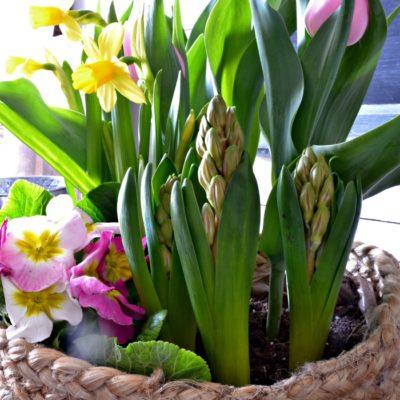 Easy Indoor Spring Flower Basket