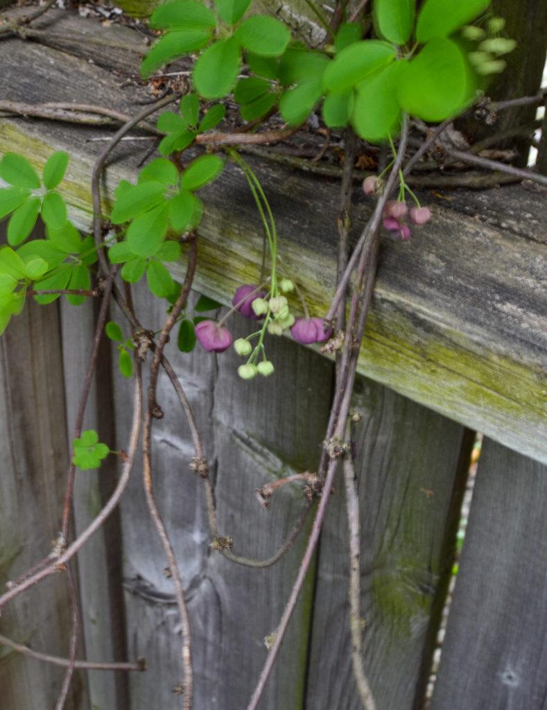 rustic garden plants